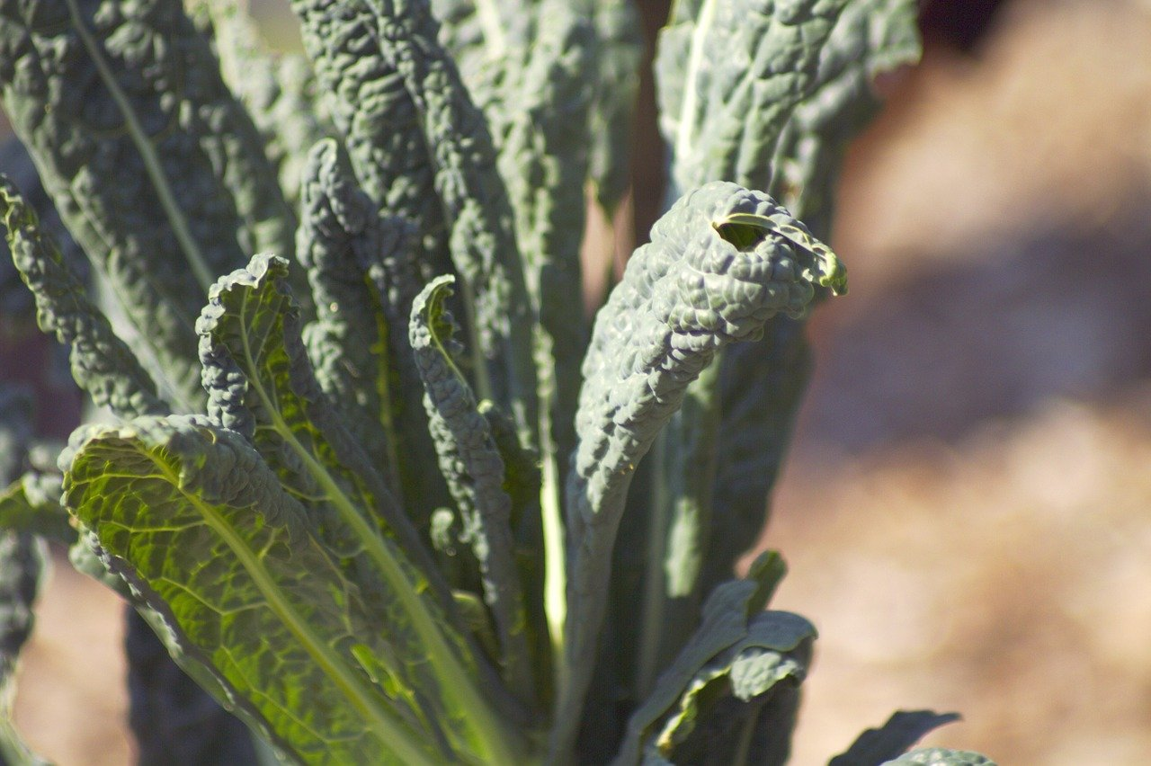 Growing Kale: Learn To Grow Kale From Seed To Harvest