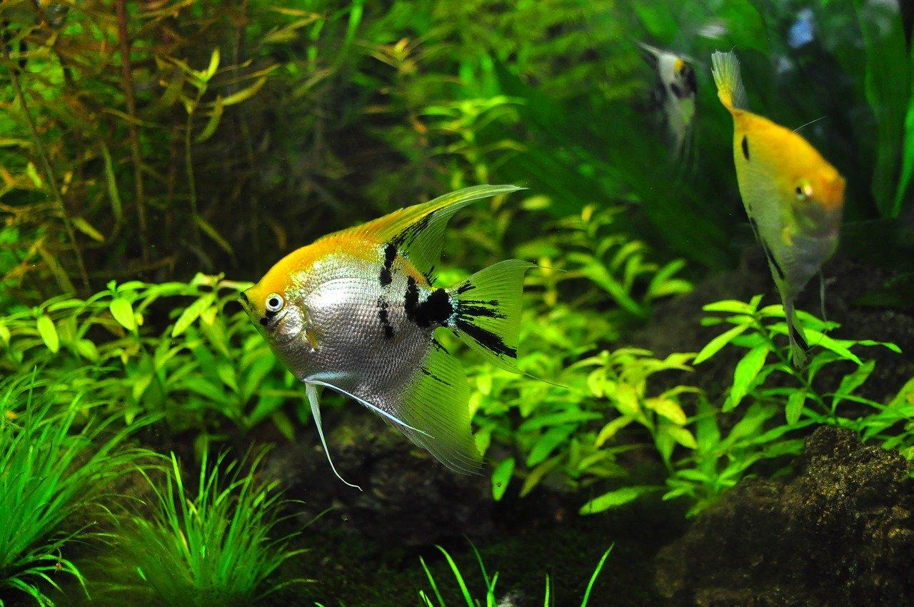 Grow Fish & Plants Together: Aquaponics 4 U Review
