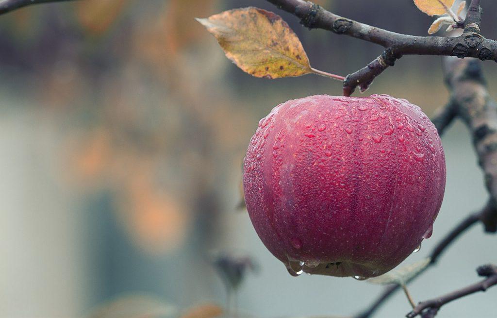 iron rich fruits