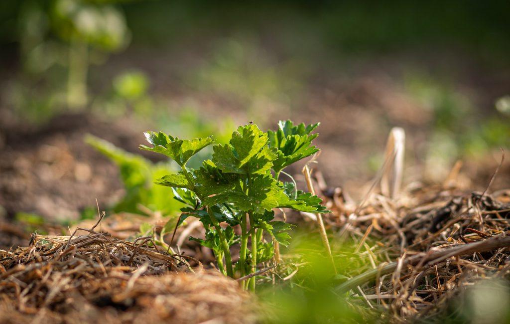 Improve Your Soil | Mulch | Black Homesteader