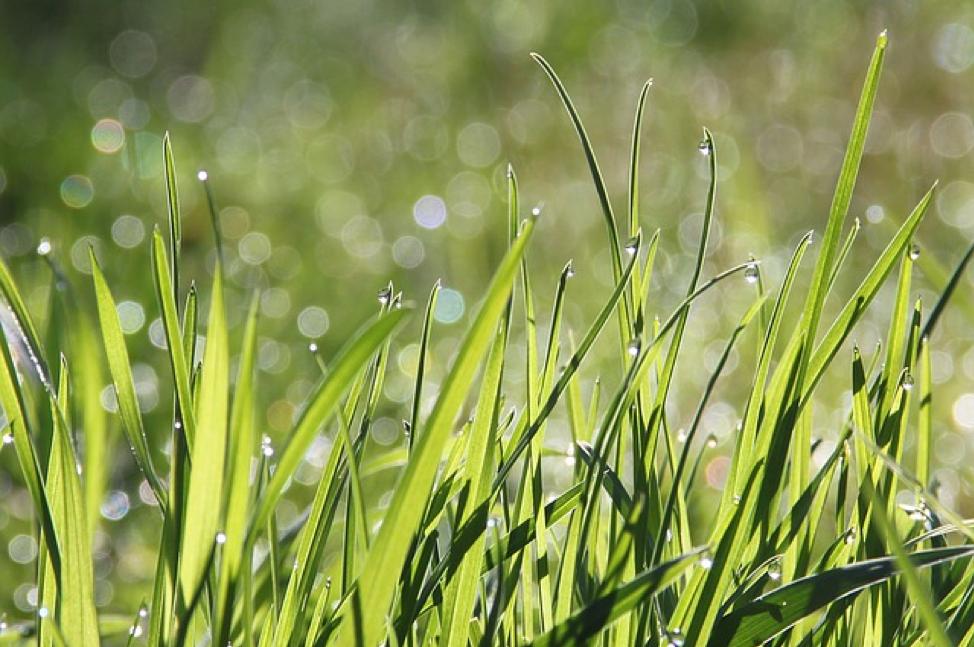 Natural Grass Alternatives & It's Benefits