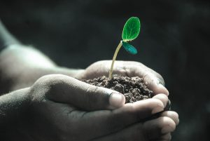improve soil quality