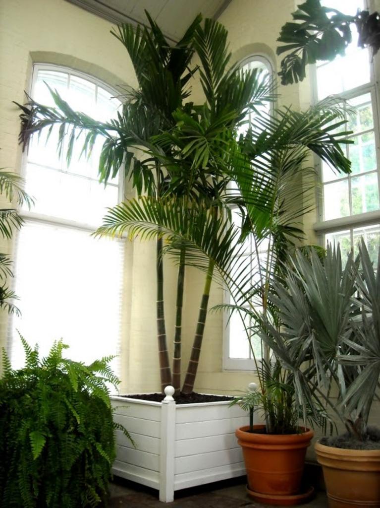 lady palm | black homesteader