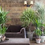 Yucca Plant | Black homesteader