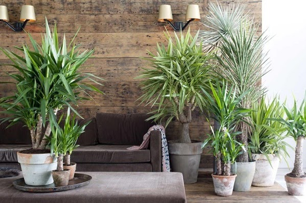 15 Large Indoor Plants To Brighten Every Room Place