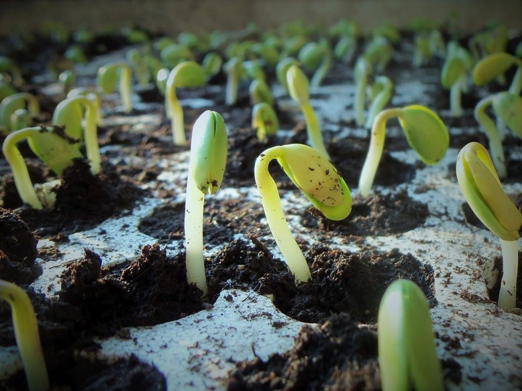 Seedlings and bulbs