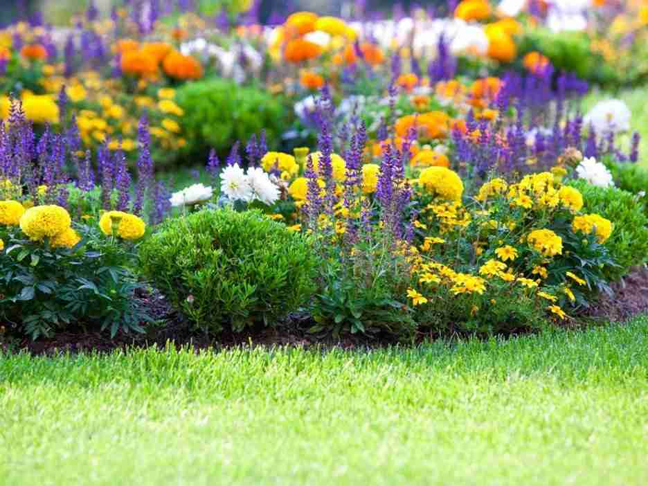 The Types of Flowers that Can Enhance Beauty of Your Home Garden
