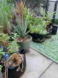 terrace container gardening | black homesteader
