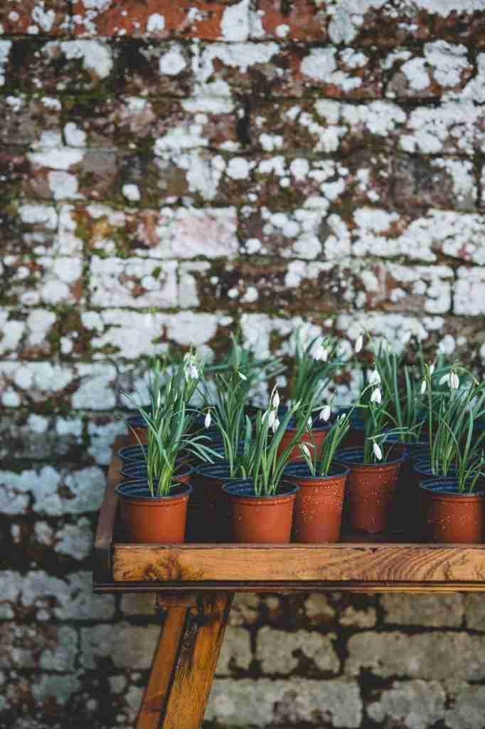 how to start a container garden   black homesteader